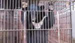 Vietnam bear rescue
