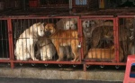 Dog Meat Alliance