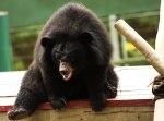 news_bear