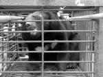 China backs the bears