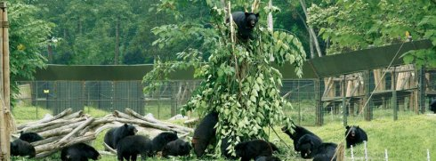 bears tree party