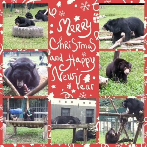 Xmas bears Vietnam