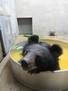 Ronnie aka John in her bath tub - Copyright: Animals Asia
